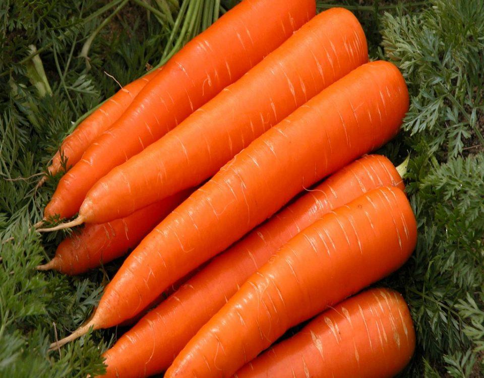 بذر هویج فلات قاره