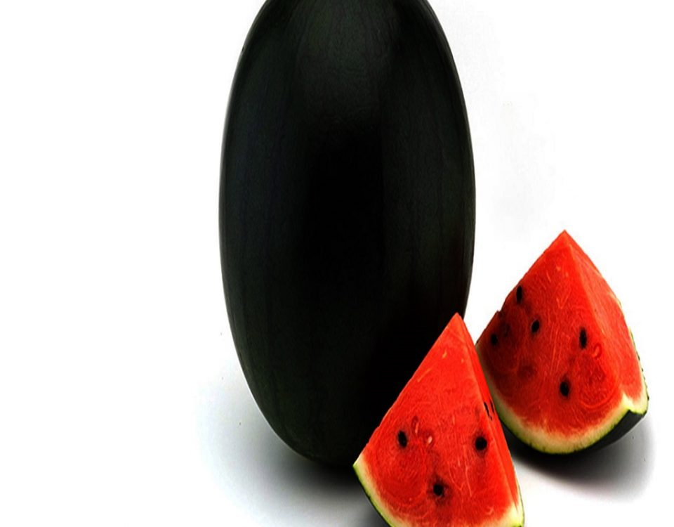 بذر هندوانه فلات قاره