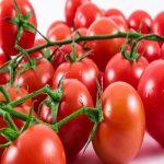 بذر گوجه فرنگی فلات قاره